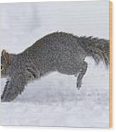 Eastern Gray Squirrel Running Wood Print