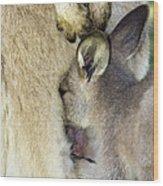 Eastern Grey Kangaroo Joey Wood Print by Tony Camacho