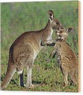 Eastern Grey Kangaroo Macropus Wood Print