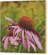 Eastern Purple Coneflower Wood Print