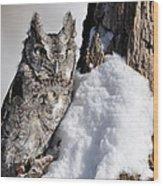 Eastern Screech Owl Wood Print