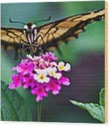 Eastern Tiger Swallowtail 7 Wood Print