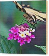 Eastern Tiger Swallowtail 8 Wood Print
