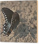 Eastern Tiger Swallowtail 8526 3205 Wood Print