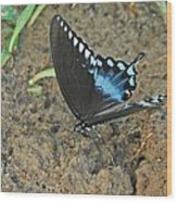 Eastern Tiger Swallowtail 8537 3215 Wood Print