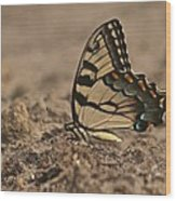 Eastern Tiger Swallowtail 8542 3219 Wood Print