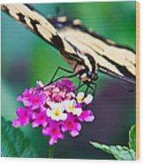 Eastern Tiger Swallowtail 9 Wood Print