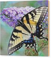 Eastern Tiger Swallowtail On Butterfly Bush Wood Print