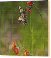 Eastern Tiger Swallowtail Profile Shot Wood Print