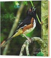 Eastern Towhee Wood Print