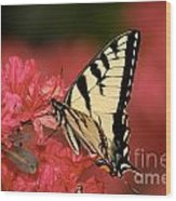Eastern Yellow Tiger Swallowtail And Azaleas Wood Print