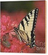 Eastern Yellow Tiger Swallowtail And Azaleas Wood Print by Lara Ellis