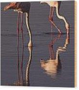 Eating Flamingos Wood Print