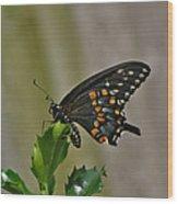 Ebony Butterfly Wood Print