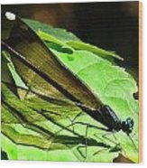 Ebony Jewelwing Damselfly Wood Print