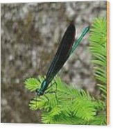 Ebony Jewelwing Male Wood Print