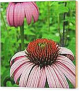Echinacea Duo Wood Print