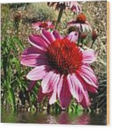 Echinacea In Water Wood Print