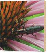 Echinacea Visitor Wood Print