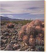 Echinocactus Row Wood Print