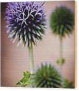 Echinops Ein France Wood Print