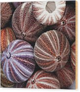 Edible Sea Urchin Souvenirs Wood Print
