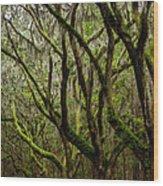 Eerie Oaks Wormsloe Plantation Savannah Georgia Wood Print
