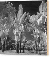Eerie Palm Trees Wood Print