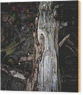 Effigy Wood Print