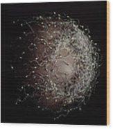 Egg Fertilisation Wood Print