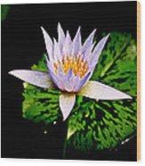 Egg Lily Wood Print
