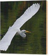Egret And Gator Wood Print