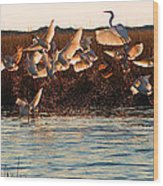 Egret And Ibis Party Wood Print