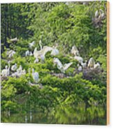 Egret Estuary Wood Print