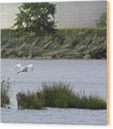 Egret Over Water Wood Print