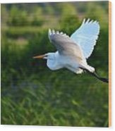 Egret Passing By  Wood Print