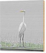 Egret Rockefeller Wma Louisiana Wood Print