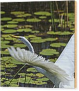 Egret Take Off Wood Print