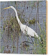 Egret Walking Wood Print