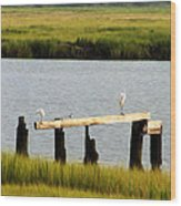 Egrets In The Salt Marsh Wood Print