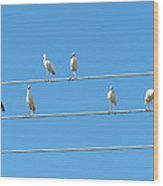 Egrets On A Wire Wood Print