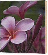 Eia Ku'u Lei Aloha Kula - Pua Melia - Pink Tropical Plumeria Maui Hawaii Wood Print