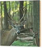Eight Point And Fawn_9532_4367 Wood Print