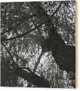 Elders Above Wood Print