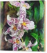 Elegant Beallara Orchid Wood Print