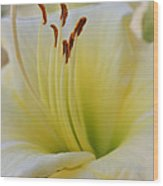 Elegant Beauty 2 Wood Print