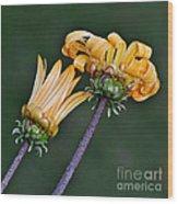 Elegant Daisies Wood Print