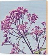 Elegant Pink Flowers. Wood Print