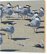 Elegant Terns Enjoying The Beach Wood Print