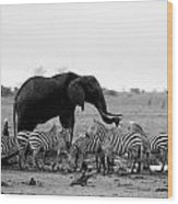 Elephant And Giraffes Wood Print